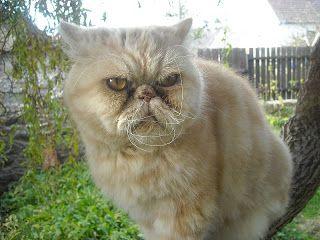 KOČKY SOBĚ: Oběd pro vás i hra pro kočku. Jen smícháte rozšťou...