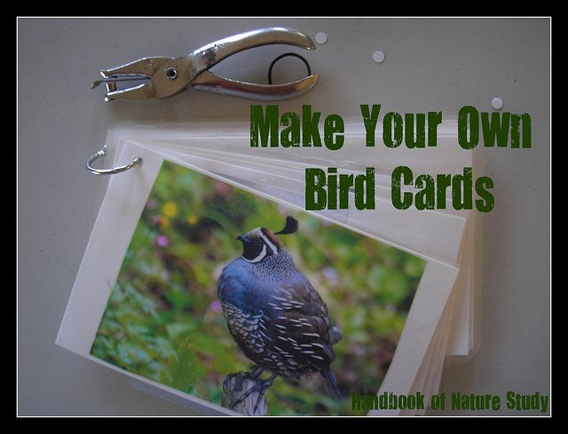 Make your own bird field guide cards with free printable. @HBNatureStudy