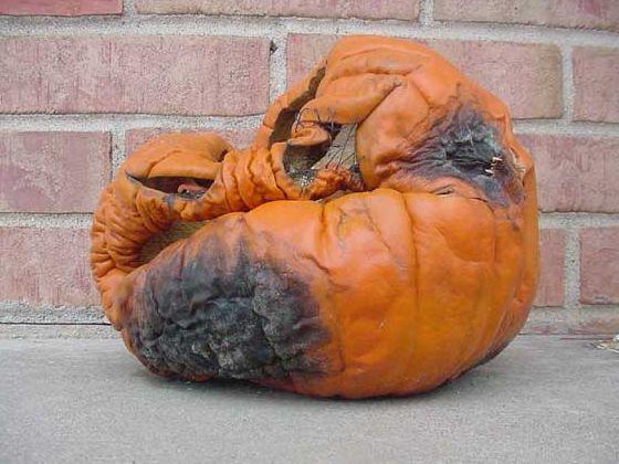 buildz: 6th Annual Parametric Pumpkin Carving