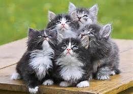 riddere og krigere cat .