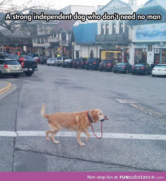 I Can Walk Myself, Thank You awwwwww
