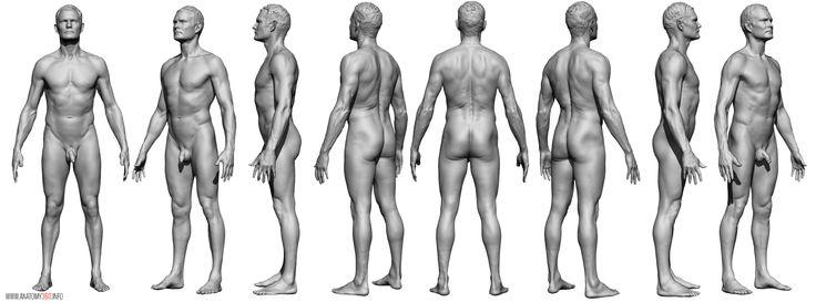 AnatomyReference_07.jpg (2436×905)