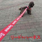 ブランド ペット犬用リード ハーネス セットシュプリーム supreme 犬首輪リードセット 調整可 小中型犬用品 2-6kgペット適応 ブランド 犬用品 通販 安い アウトレット