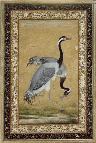 The drawing of cranes in ink on paper may have been done by Mansur, one of the leading artists of the Mughal court in the early 17th century, during the reign of Jahangir (r. 1605-1627). The emperor's memoirs show him to have been keenly interested in all aspects of the natural world. He kept a pair of saras cranes for at least five years, studying them carefully and interspersing his account of the events of courtly life with details about the birds' nesting habits.