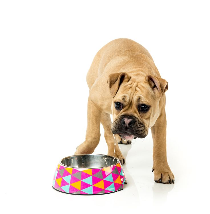 FuzzYard Crush Easy Feeder Pet Bowl