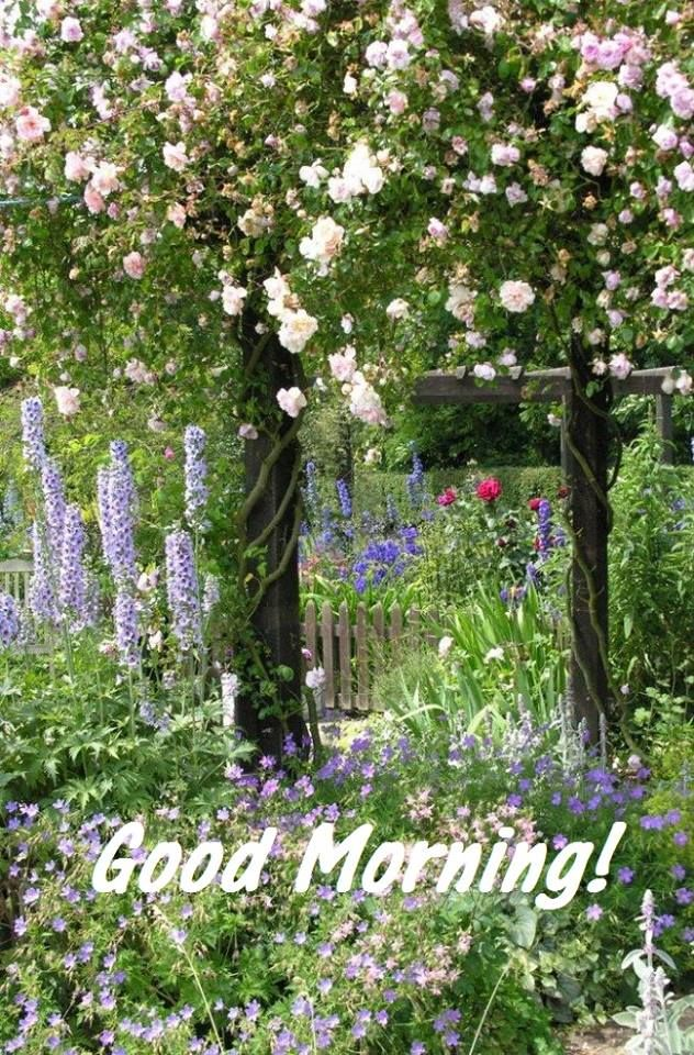 60 mejores im genes sobre good morning quotes en pinterest for Jardines de soraya