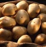 White Kennebec Potatoes