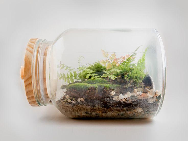 DIY-Anleitung: Kleines Biotop im Glas anlegen via DaWanda.com