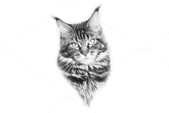 Maine Coon by NikSorl on Creative Market