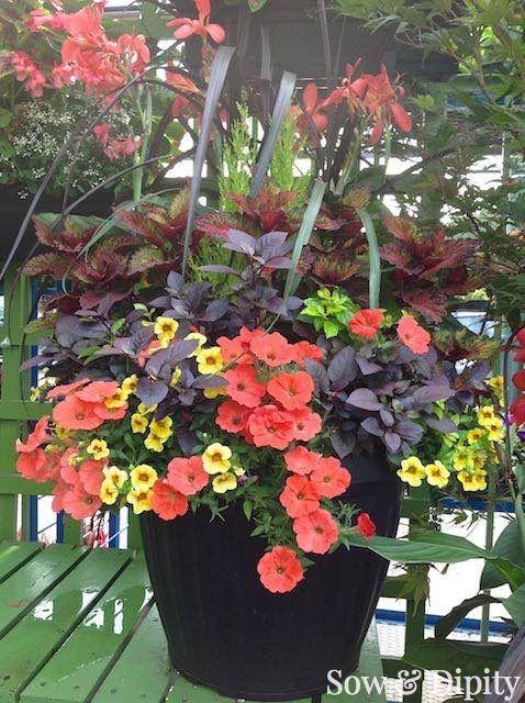 beautiful colour combination - vivid orange, bright yellow and dark purple