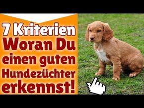Hundezüchter ! 7 Kriterien - Woran Du einen guten Hundezüchter erkennst! - YouTube