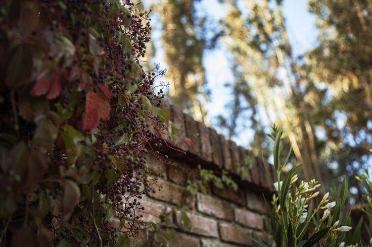 The ivy covered brick wall in front of the Casa Patronal