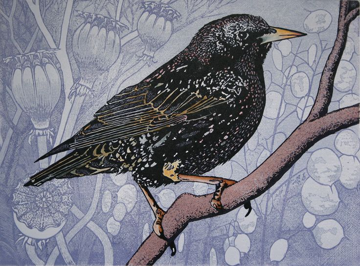 Linocut of a starling by Mike Smith.