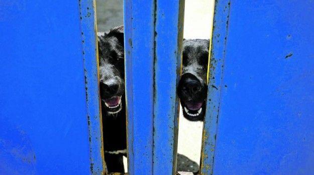"""Milhares pedem """"justiça"""" contra dono do cão que morreu à fome   Portugal"""