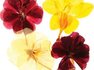 How To Press Flowers by homelife.com.au DIY Flower_Press homelife_com_au | See more