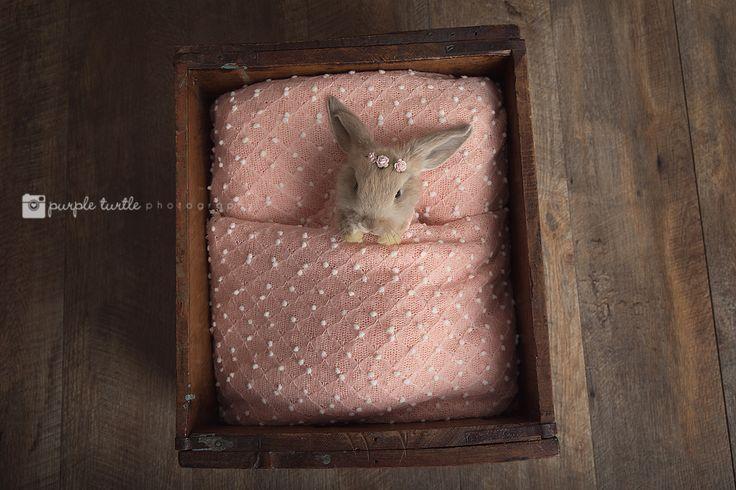 The Little Brown Rabbit Photography mascot, LB, in her first newborn bunny shoot. www.facebook.com/littlebrownrabbit