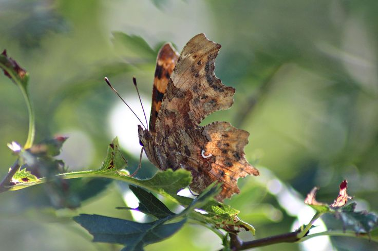 The Comma by Anja Wessels on 500px