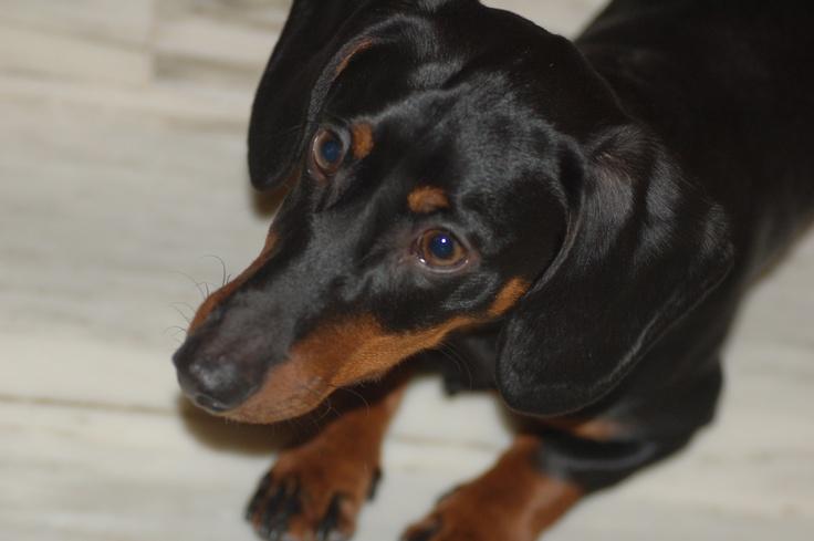 Arturo, my dog
