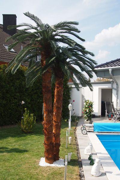 Künstliche Palme Poolbereich Innovative Gestaltung Von Bellaplanta