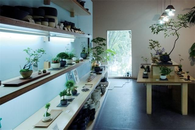 I can't help myself..Sinajina Bonsai shop in Tokyo