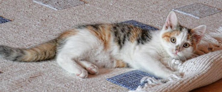 Ways to Dry the carpet