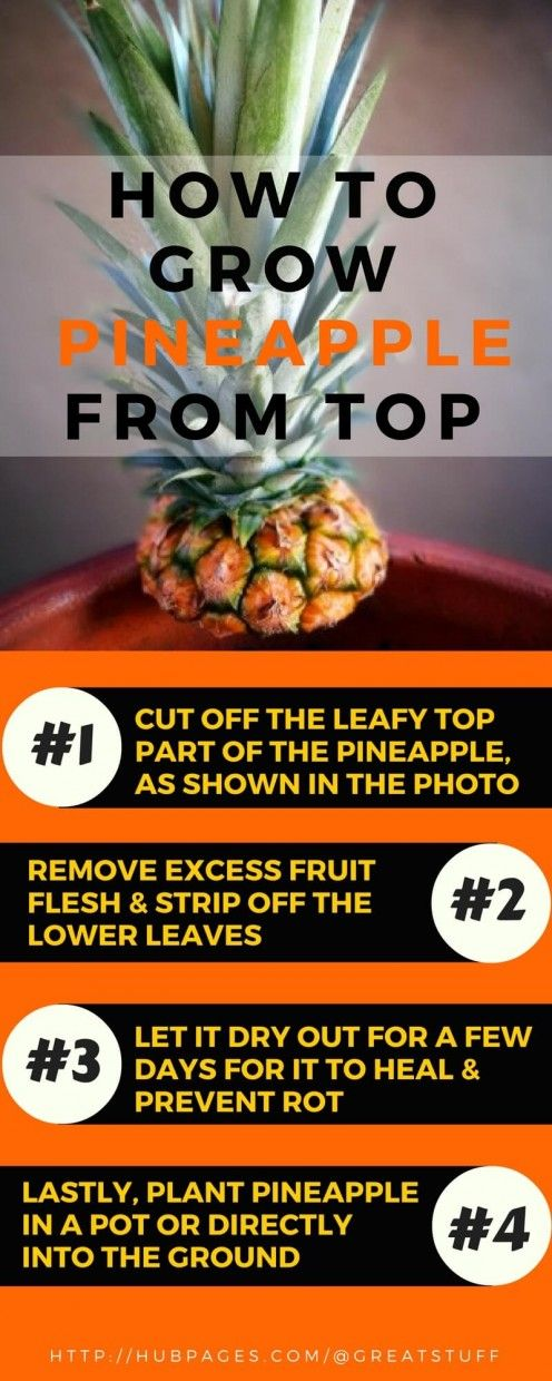 How to Plant & Grow Pineapple Top in 4 Easy Steps (With Photos)