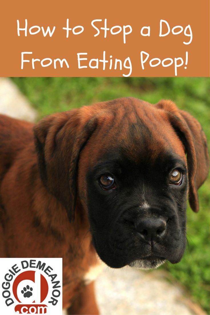Stop Dog From Eating Poop Pumpkin