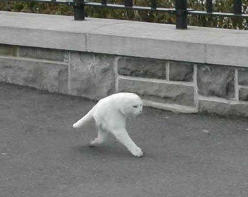 New Cat Species Found on Google Street View | Google Street View World