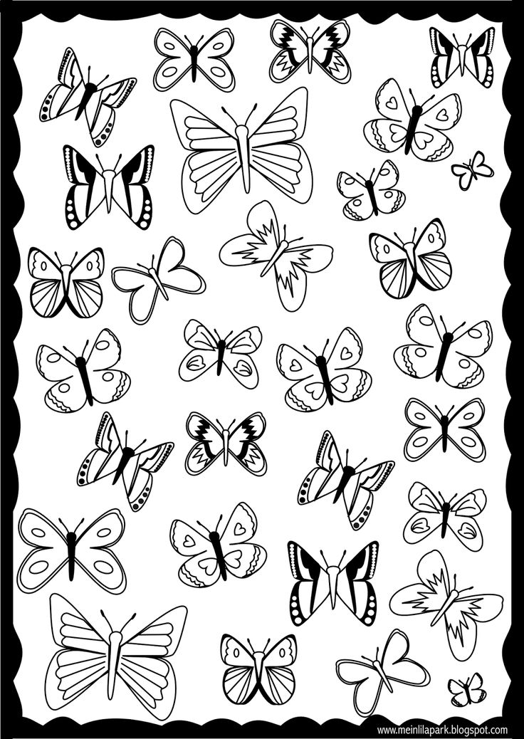 free printable butterfly coloring page ausdruckbare ausmalseite freebie