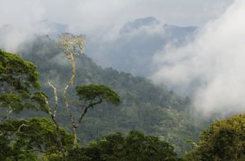 cerro tacarcuna | Panama National Park | Darien National Park