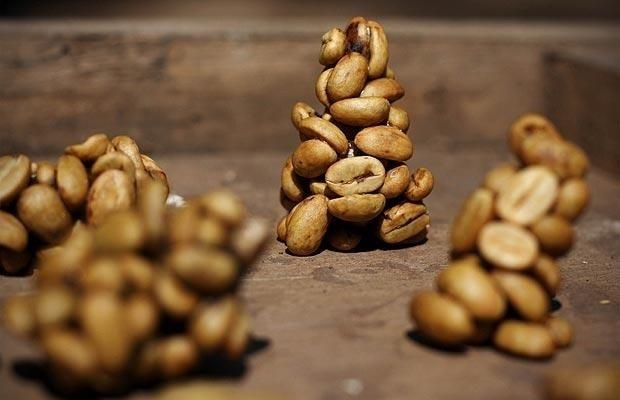 """Indonesian Original Coffee Luwak:Il più pregiato caffè al mondo, ottenuto dalla civetta delle palme di Sumatra.I chicchi infatti, una volta raccolti vengono offerti alla civetta delle palme (il Luwak appunto) che li """"tosta"""", per così dire, naturalmente. Una volta """"recuperati"""" però, i chicchi """"digeriti"""" vengono tostati normalmente.Un caffè dal gusto delicato e dal sentore verde e floreale, con note di cioccolato e mandorla. Disponibilità limitata.100% arabica- basso grado di acidità.  $110"""