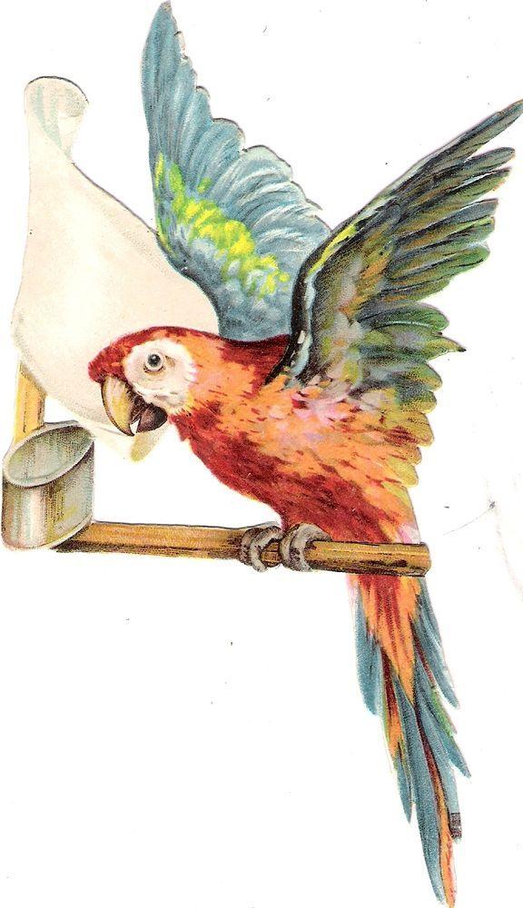Oblaten Glanzbild scrap diecut chromo Papagei 15,8cm  parrot Kakadul bird oiseau: