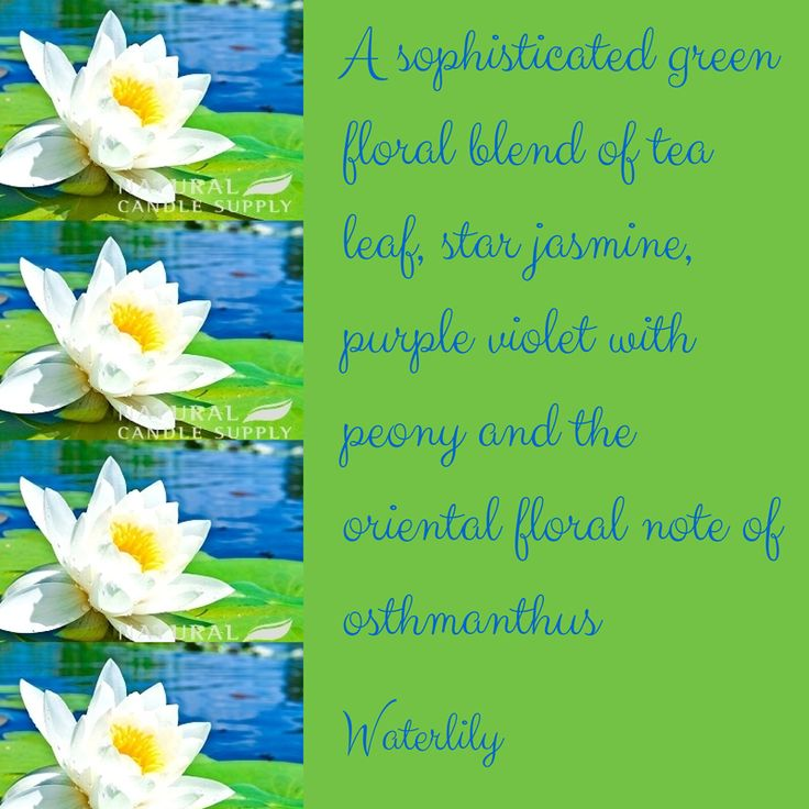 Waterlily is a sophisticated fragrance that is sure to impress with pretty floral blends of violet, jasmine, peony and tea leaf.  Click here to find out more: http://bit.ly/1scq2Qc