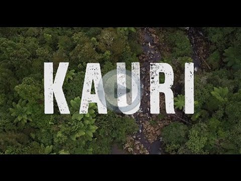 NZ Travel Packages | Active Adventures  A guide to New Zealand's top destinations - Kauri Trip North Island New Zealand   #newzealand #milfordsound #travel #travelpackages