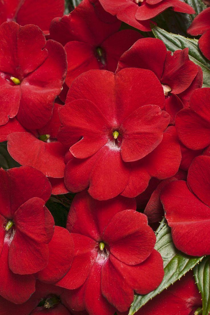 New Garden Ideas 2015 88 best 2015 annuals images on pinterest   proven winners, flowers