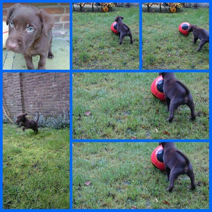 Puppy Pablo. ....
