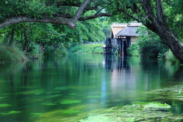 美しい水と豊かな緑長野県安曇野の観光スポット大王わさび農場を訪れて