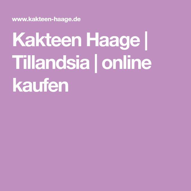 Kakteen Haage | Tillandsia | online kaufen
