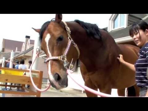 乗馬クラブパロミノ気持ちよくて鼻をの伸ばす馬