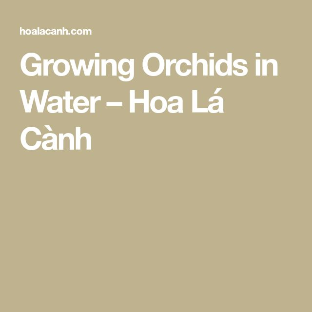 Growing Orchids in Water – Hoa Lá Cành