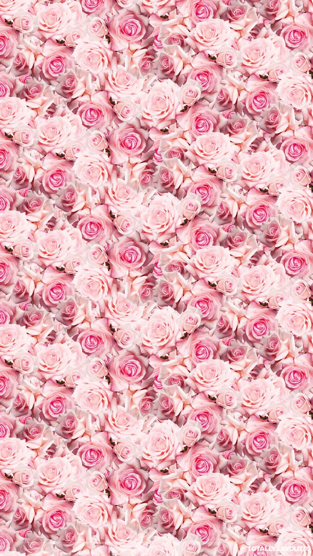 iPhone wallpapers, Wallpapers and Pink roses on Pinterest