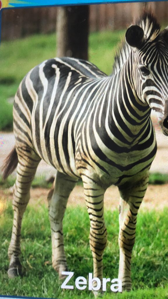 Listening to Zebras At Botswana with White Noise Lite by