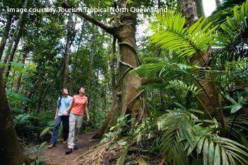 walking trail in Cairns rainforest