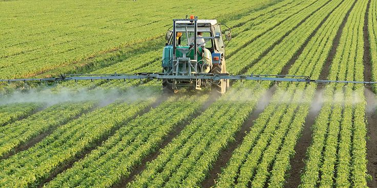 Biologisch eten loont minder pesticiden in je lichaam | Als kinderen overgaan op het eten van biologische groenten en fruit, neemt de hoeveelheid pesticiden in hun lijf drastisch af. Dat hebben wetenschappers ontdekt. Eigenlijk mogen er steeds minder kwalijke pesticiden in en rond het huis worden gebruikt. Maar het grote probleem zit in de gewassen... #biologischeten #kinderen #minderpesticiden
