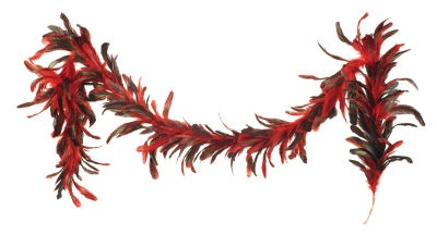 Feathers for Christmas Decorations - I am thinking a more natural rooster feather decoration - anyone found anything I should check out?