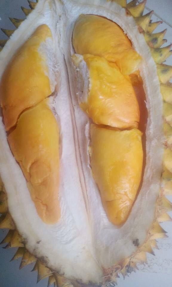Monggo yang hoby menanam,... Menyediakan segala jenis bibit buah- buahan berkualitas Di antaranya: Aneka jenis durian Aneka jenis klengkeng Aneka jenis jambu air Aneka jenis jambu biji Aneka jenis mangga Aneka jenis rambutan Aneka jenis nangka Aneka jenis jeruk Aneka jenis ceri Aneka jenis kelapa Aneka jenis sawo Aneka jenis belimbing Aneka jenis delima Aneka jenis pisang Aneka jenis tin Anggur brazil/jaboticaba Black sapote Mamey sapote Lilipili Plum natal Nanas medusa Putsa/apel india…
