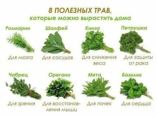8 полезных трав.