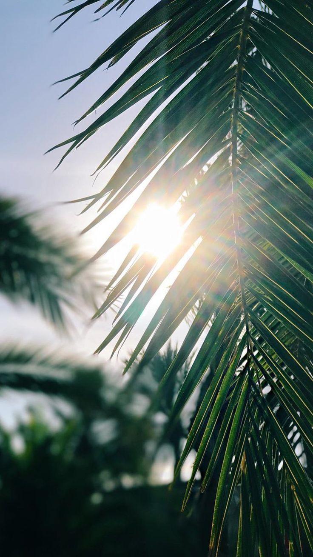Blätter funkeln im Sonnenlicht Was für eine Schönheit für das Auge. Die Blätter sind hoch