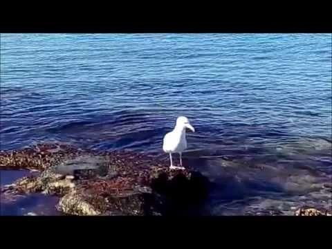 Larus documentary - YouTube