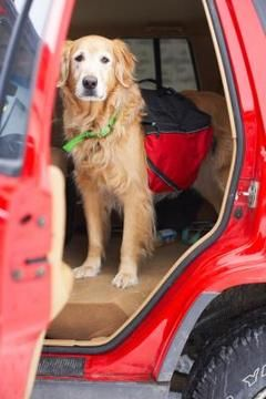 Dog-friendly vacation spots have a variety of pet-friendly lodging options.